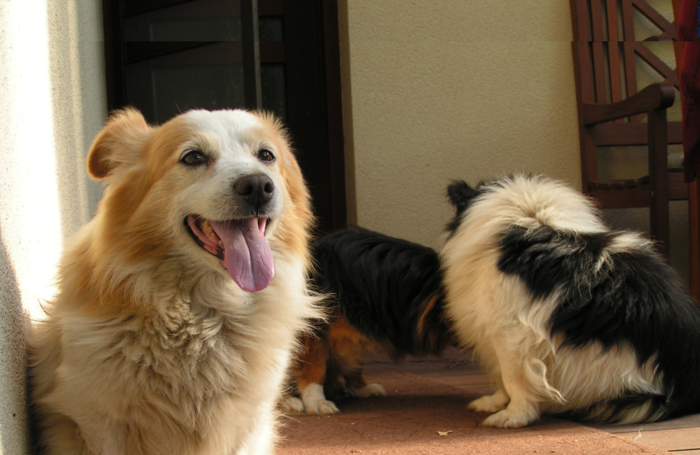 V Malackách so psom