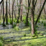 Mokré a podmáčané pôdy