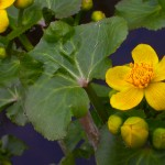 Rastliny na Záhorí