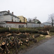 Opäť o pár stromov v meste menej...